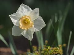 mozirski-gaj_12 (carlo) Tags: flowers olympus slovenia slovenija fiore botanicalgarden omd em1 ortobotanico giardinobotanico mozirje mozirskigaj