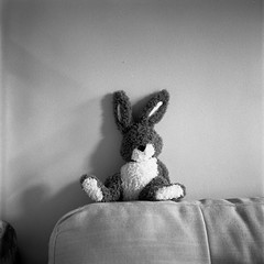 Bunny (tercrossman87) Tags: film home mat 124g push epson hp5 800 development ilford yashica 119 v550 lc29 ilfotec