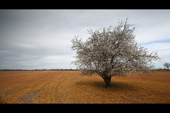 * (Henrik ohne d) Tags: tree field spring tracks blooms efs1022mm eos400d hitechnd09gradse hoyapro1cirpl march2016