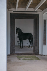 Andalusia (Pieter Mooij) Tags: horse andalucia andalusia blackhorse paard