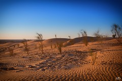 Gold der Sahara (stein.anthony) Tags: blue sahara nature landscape heaven tunisia natur himmel 1001nights landschaft wste tunesien