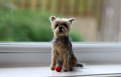 Yorkshire Terrier (adore62) Tags: yorkie felted yorkshireterrier needlefelted feltdog yorkiedog brightondogs needlefelteddog felteddog feltedfido