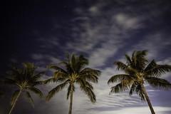 Sitting Pretty (dans eye) Tags: beach palms stars star flickr florida midnight fl starrynights junobeachpier starstudies