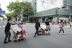 Delivery of orchid flower / Fuji X-Pro2  Fujinon XF 18mm F2 R (mokuu) Tags: orchid delivery dolly crosswalk   orchidflower