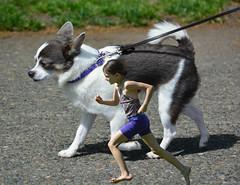 Dog Racing (swong95765) Tags: dog scale girl race kid racing leash runrunning