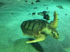 Turtle in Spain (Uktransportvideos82) Tags: