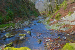 Forest Stream (Mackie396) Tags: nature water forest scotland stream moray