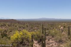 IMG_3215.jpg (ashleyrm) Tags: travel arizona museum sonora desert tucson tucsonarizona