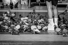 Barcellona 25.10 - 02.11.2014 - WEB - 022 (Albycocco80) Tags: barcelona catalunya sitges barcellona catalogna barcelona2014 barcellona2014 albycocco80 albertovoarino albertovoarino2014 albertovoarinophotos2014 albycocco802014 albycocco80photos2014