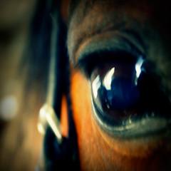 Deine blauen Augen (feldweg) Tags: horses horse art caballo cheval foto fotografie exhibition pferde cavallo pferd ausstellung kon cheveaux