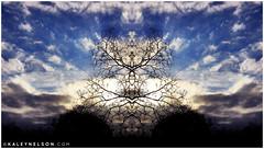 kaleynelsonsym4_1 (kaleynelson) Tags: trees abstract tree nature landscape meditate symmetry mirrored symmetric symmetrical meditation psychedelic spiritual chakra chakras alexgrey sacredgeometry kaleynelson
