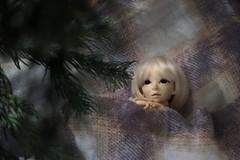 Dreamin' of a white Christmas (nanaberu) Tags: momo bjd ninodoll