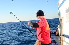 SportFishing_12.29.15-5 (Troop2 Riverside) Tags: youth fishing scouts adventures scouting bsa cleaningfish sportfishing deepseafishing charterboat oceanfishing danawharf scoutingoutdoors scoutsdostuff troop2riverside bsafishing fishingmeritbadge