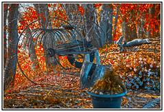 History - Farming - Antique Horse Drawn Hay Rake - 2. (Bill E2011) Tags: canada history canon cattle farming canadian collection rake feed horsedrawn hay saskatchewan agriculture