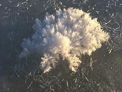 Ice Crystal - Ice Flower (keibr) Tags: winter snow ice crystals icecrystals hola iceflowers prstmon blipfoto prastmon keibr nearblip ngermanlanriver 160115keibr