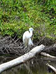 The Patient Fisher (failing_angel) Tags: florida wetland esterobay fortmyers fortmyer sixmilecypressslough sixmileslough 240515 sixmilecypresssloughpreserve linearecosystem naturaldrainageway