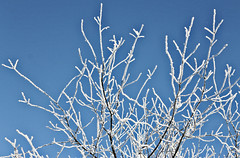 Frost in blue (Erik Nikolai Halsteinrud) Tags: winter cold tree frost frosty icecold