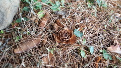 Flower of Wood (Omair Anwer) Tags: wood old brown flower rotten fromgreen