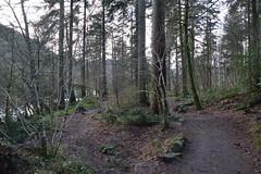 DSC_0013 (Lord Edam) Tags: winter nature water grass wales river stones walk wildlife betwsycoed conwy afon llugwy