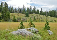 Bearpaw Lake Meadows, Grand Teton National Park (wldrns) Tags: hiking wyoming grandtetonnationalpark leighlake bearpawlake leighlaketrail