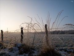 Frosty Morning (fixedfocallength) Tags: leica schnee winter snow lumix morninglight frost panasonic commuting m43 mft gx7 microfourthirds leicadgsummilux15mm117