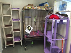 "Purple Office showing Dodgers Pen • <a style=""font-size:0.8em;"" href=""http://www.flickr.com/photos/72892197@N03/24601206053/"" target=""_blank"">View on Flickr</a>"