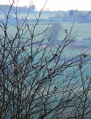 Twittering (littlestschnauzer) Tags: uk winter tree nature birds rural countryside wildlife yorkshire flock january birdsong twig fields goldfinches emley 2016 chirping twitter twittering