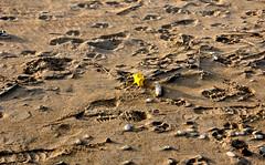 spiaggia ed aree protette (enricoerriko) Tags: street nyc sea italy beach port la barca italia gente confine via persone porto donne vela angela rue treno spiaggia molo italie marche vie cima onde sabbia pesce braccio ancora pescheria ambiente fosso stellamaris ferrovia asola uomini pennello tracce corda boe aldebaran bitta pescatori marinai recinzione peschereccio civitanovamarche bassamarea passeggiare ruspa portocivitanova mareadriatico bonazza citan sanmarone areaprotetta vongolara clubvela civitanovese enricoerriko pesciarola
