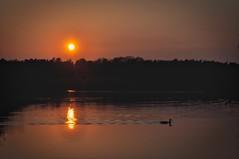 Sonnenuntergang... (cuba-photo) Tags: sunset summer orange sunlight lake beach nature strand relax landscape gold golden duck wasser quiet sonnenuntergang sommer natur ente sonne spiegelungen ruhe aller 2011 nikond90