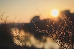waiting for spring... (alicebutenko) Tags: flowers winter light sleeping sunset plants reflection closeup river evening soft day cityscape bokeh atmosphere dry end dreamy lovely bliss