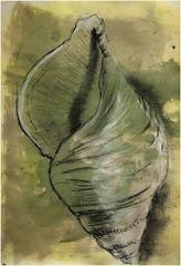 Meeresschnecke1 (Alemwa) Tags: berlin kreuzberg natur sketching schnecke zeichnung bung zeichnen prparat meeresschnecke museumfrnaturkundeberlin alemwa formerfassung