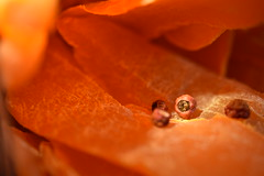 "MacroMonday ""Vibrant Minimalism"" (mckernanmargaret) Tags: light red orange berries vibrant mango dried minimalism macromonday"
