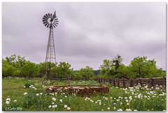 Texas Hill Country... (calba) Tags: flowers windmill landscape spring flora nikon texas springflowers topaz texaswildflowers texashillcountry wildfowers pricklypoppy texaslandscape texasnature nikon2470mmf28g cathyalbaphotography nikond750