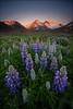 [ ... westfjords ] (D-P Photography) Tags: sunset red summer sun mountains flower canon landscape island iceland mood purple fjord landschaft lupin lupine westfjords feisol wildlflower easiness dpphotography iuriebelegurschi dennispolkläser