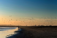 """When the Gulls fly"" (helmet13) Tags: california sunset sky people usa seagulls beach birds raw silhouettes peaceful pacificocean lowtide gettyimages sealbeach aoi 200faves peaceaward heartaward world100f platinumpeaceaward d800e"