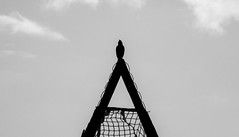 bird in the middle (-gregg-) Tags: sky bw bird net clouds soccer