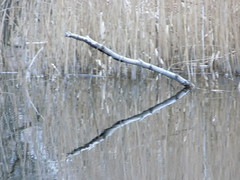 reflection on water (JAMESO'shea1) Tags: winter sunset water sticks shadows