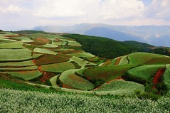 View of Dongchuan fields, Yunnan (adamba100) Tags: life china street city trip travel light boy portrait people woman mountain man color colour cute male men tourism lamp girl beautiful beauty face field female children landscape asian person star town canal kid interesting women asia pretty vietnamese cityscape child play view outdoor hill innocent sightseeing chinese decoration beijing lifestyle style charm korea headshot tourist vietnam ridge mongolia korean human thai innocence mountainside lantern gadget grassland pure channel pendant foothill purity mongolian