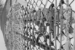 Being Knotty (Georgie_grrl) Tags: friends toronto ontario fence photographers social chainlink fabric pentaxk1000 knots outing knotty ilford400asa rikenon12828mm torontophotowalks seatonvillagesaturdayscramble topwsvss
