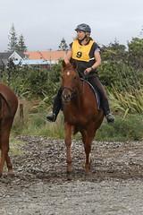 IMG_EOS 7D Mark II201604039701 (David F-I) Tags: horse equestrian horseback horseriding trailriding trailride ctr tehapua watrc wellingtonareatrailridingclub competitivetrailriding sporthorse equestriansport competitivetrailride april2016 tehapua2016 tehapuaapril2016 watrctehapuaapril2016