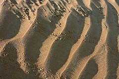 Beetle Tracks (tinlight7) Tags: sand desert uae beetle tracks beetles animalia arthropoda käfer ummalquwain coleoptera insecta besouros hexapoda pterygota coléoptère coleópteros coleotteri escaravelhos 鞘翅目 bassata taxonomy:class=insecta taxonomy:kingdom=animalia taxonomy:order=coleoptera taxonomy:phylum=arthropoda taxonomy:subclass=pterygota taxonomy:subphylum=hexapoda taxonomy:common=beetles コウチュウ目 taxonomy:common=coleotteri escarabajosyparientes taxonomy:common=escarabajosyparientes taxonomy:common=coleópteros taxonomy:common=käfer цвердакрылыя жесткокрылыеилижуки жукі taxonomy:common=цвердакрылыя taxonomy:common=コウチュウ目 taxonomy:common=鞘翅目 taxonomy:common=жесткокрылыеилижуки taxonomy:common=жукі scarabéeshannetonscoccinellescarabesetapparentés taxonomy:common=scarabéeshannetonscoccinellescarabesetapparentés taxonomy:common=coléoptère taxonomy:common=escaravelhos taxonomy:common=besouros