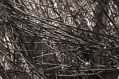 You shall not pass (taddzilla) Tags: trees bw nature sunrise outside sticks florida branches exploring bamboo twigs allrightsreserved 2016 getoutside markhampark