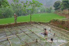 This is work, honest - we breed fish (10b travelling / Carsten ten Brink) Tags: food fish pool work asian lumix pond asia asien southeastasia farm culture vietnam thai asie breed tribe northern ethnic indochine indochina 2015 maichau ethnicgroup whitethai tenbrink carstentenbrink iptcbasic 10btravelling