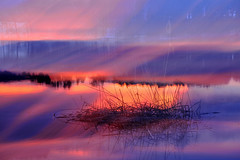 Roseaux roses (Valentin le luron) Tags: abstract nature de nikon eau riviera suisse bret lac lausanne e yves paysage 800 roseaux couleur aurore vaud abstrait romandie paudex 20160318