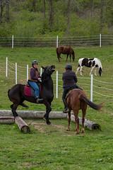 DSCF0354.jpg (Ed Traywick) Tags: horses horse leo robyn obstacles horseclinic