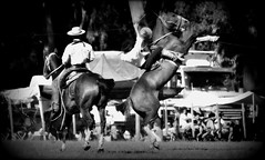 Jorge Ariztegui, 54 aos (Eduardo Amorim) Tags: horses horse southamerica argentina criollo caballo cheval caballos cavalos pferde herd cavalli cavallo cavalo gauchos pferd ayacucho chevaux gaucho cavall  amricadosul gacho amriquedusud provinciadebuenosaires  gachos  sudamrica suramrica amricadelsur sdamerika crioulo caballoscriollos criollos jineteada  tropillas buenosairesprovince americadelsud gineteada tropilhas tropilla crioulos cavalocrioulo americameridionale tropilha caballocriollo eduardoamorim cavaloscrioulos