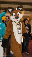 _DSC8612 (Acrufox) Tags: midwest furfest 2015 furry convention december hyatt regency ohare rosemont chicago illinois acrufox fursuit fursuiting mff2015