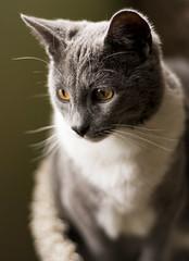 (Dinosaursinmysoup!) Tags: sunlight cute kitten whiskers babycat