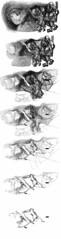 map-bull-dragon-transf