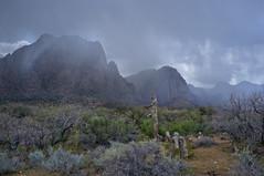 Thunder in the Desert (Pete Foley) Tags: nationalpark lasvegas nevada desertrain littlestories flickrsbest redrocknationalpark overtheexcellence picswithsoul fujix100 whyimovedtovegas